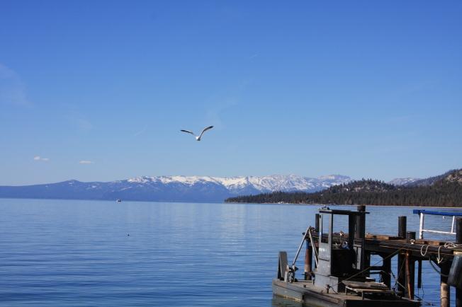seabird-over-lake-tahoe