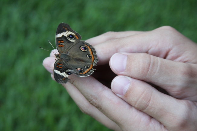 Butterfly in Hands